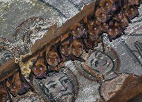 200 de lilieci aparținând unor specii protejate și-au făcut adăpost într-o biserică de lemn din Sălaj»